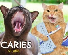 caries-en-gatos-todomascotas