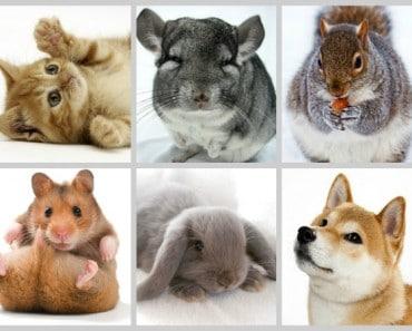 collage-cabecera-animales-preciosos-todo-mascotas