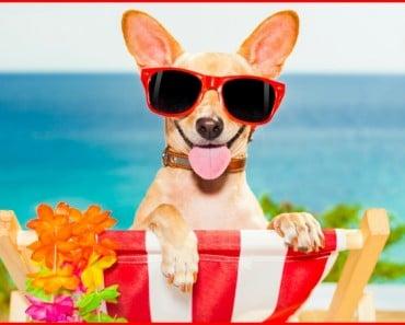 perro-verano-portada-salud