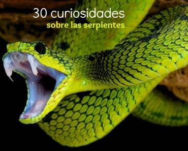 30 Curiosidades sobre serpientes
