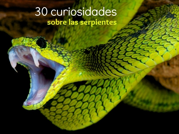 30 Curiosidades sobre las Serpientes