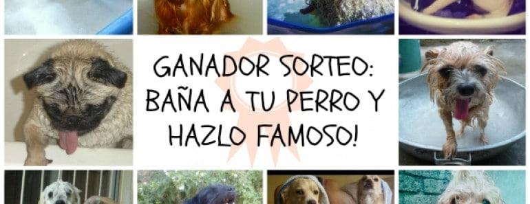 GANADOR-SORTEO-bana-a-tu-perro-y-hazlo-famoso