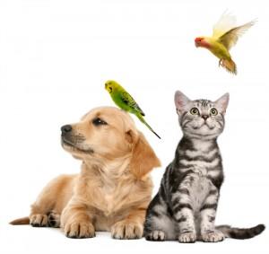 Sorteos o concursos Todo Mascotas