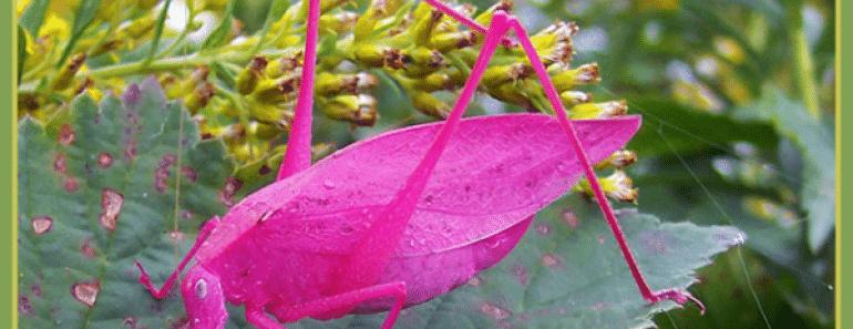 unusual-colored-animals-portada