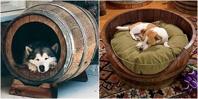 cama-y-caseta-para-mascotas-hecha-con-barriles-Evolucion-Verde