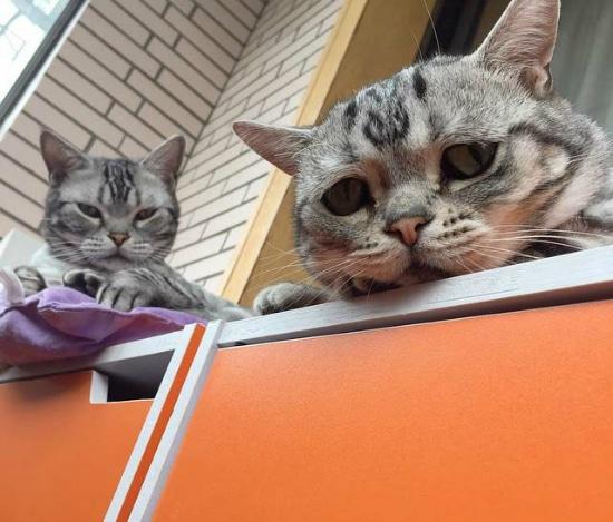 gato-con-la-cara-mas-triste-13