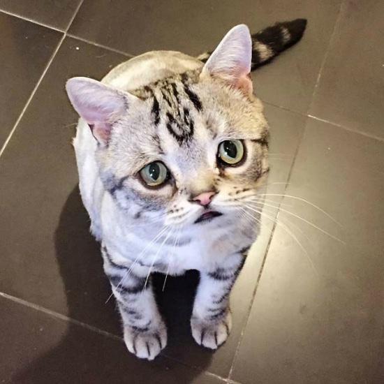gato-con-la-cara-mas-triste-2