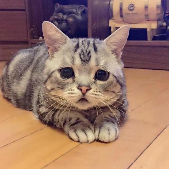gato-con-la-cara-mas-triste-6
