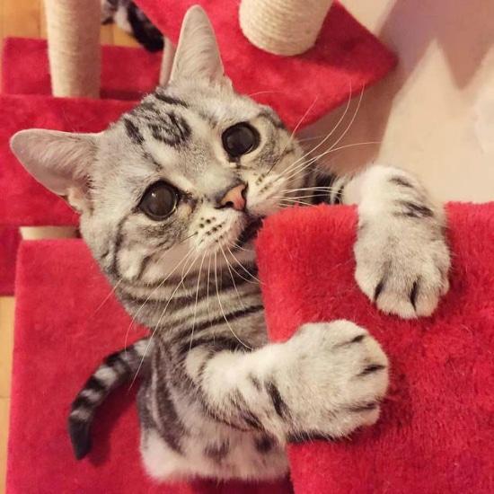 gato-con-la-cara-mas-triste-7