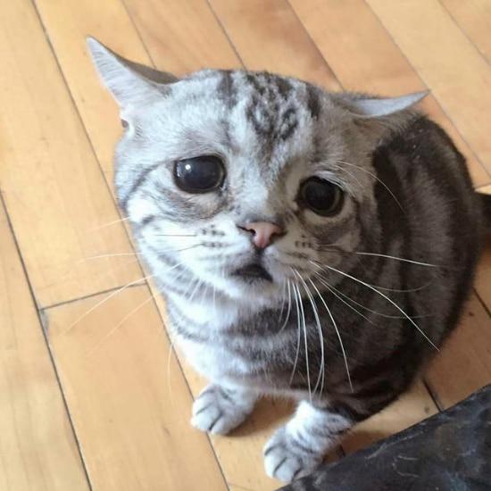 Luhu El Gato Con La Cara Más Triste Que Has Visto Todo