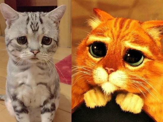 luhu  el gato con la cara m u00e1s triste que has visto todo mascotas shrek clipart shark clipart black and white