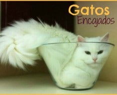 gatos-encajados-post