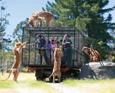 Zoológico Nueva Zelanda