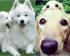 perros-papas-e-hijos-identicos-TM