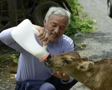 Naoto-Matsumura-El-Guardian-De-Los-Animales-De-Fukushima