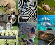 curiosidades-animales-que-seguro-no-conocias-todo-mascotas-euroresidentes