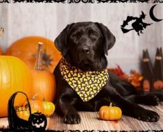 halloween-animal-todomascotas