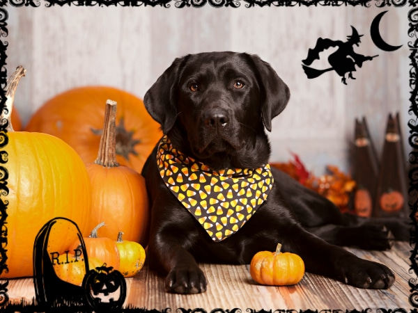 Ideas para disfrazar a tu mascota en Halloween