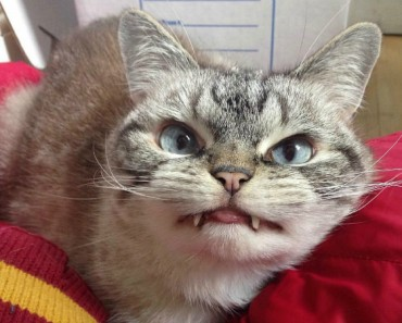 loki-el-gato-vampiro