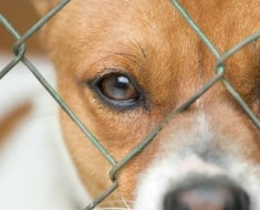 Close up of dog's face behind wire mesh