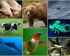 curiosidades-animales-post-todo-mascotas-segunda-parte