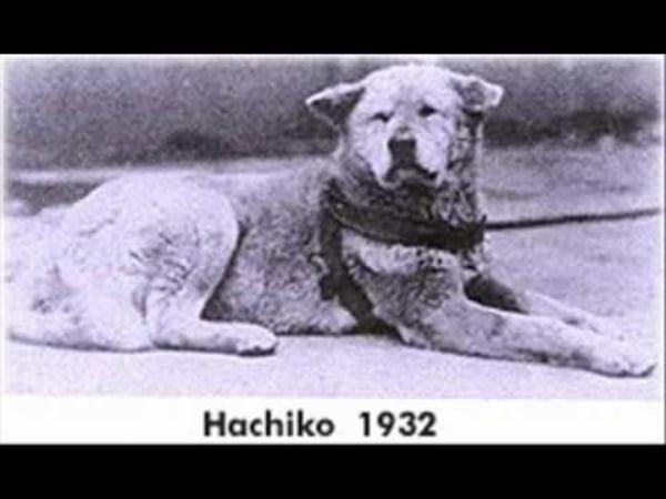 foto Hachiko