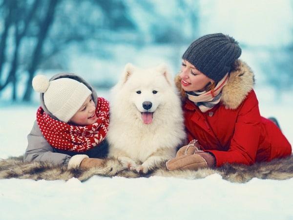 Mascotas para regalar en navidad todo mascotas - Todo para nuestras mascotas ...