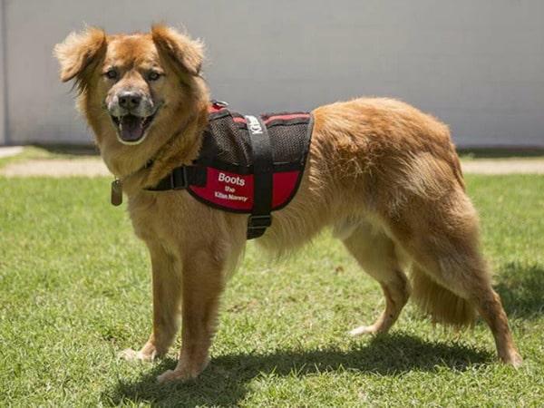 perro-sobreviviente-del-huracan-katrina