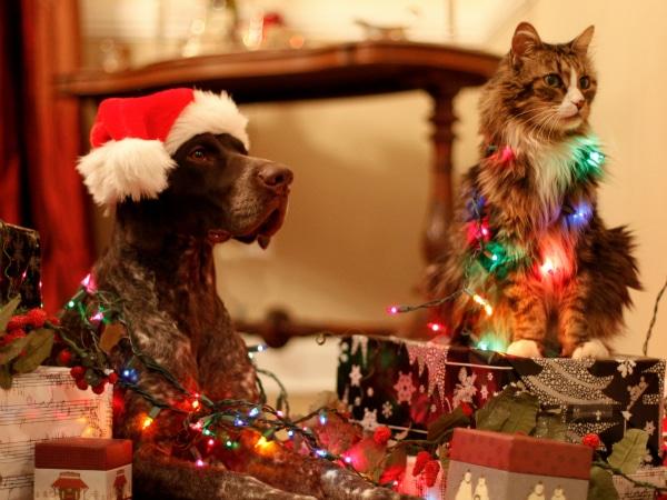 Gatos cantando villancicos de navidad