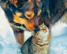 perro-y-gato-nieve