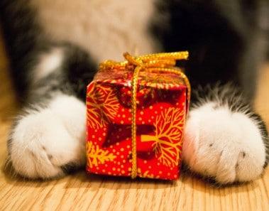 regalitos-para-mascotas
