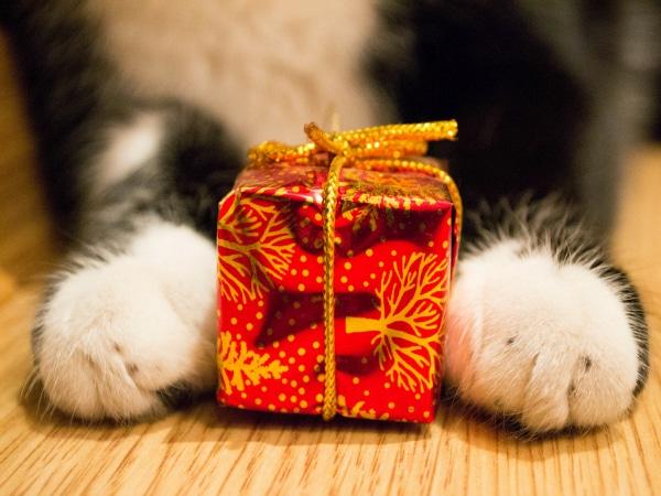 regalos originales mascotas