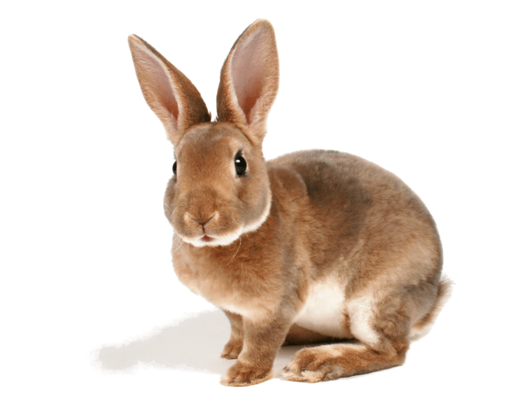 Animales-Conejo-322494-1024x816.png