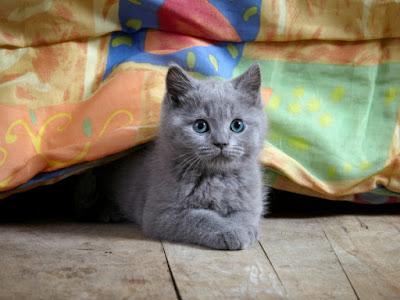 Gato debajo de cama