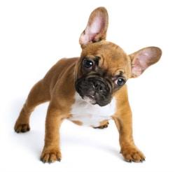 Perro todo mascotas euroresidentes