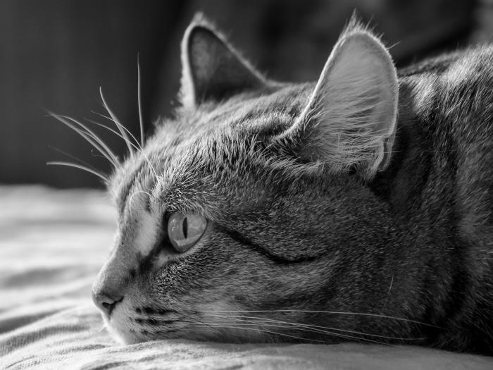 Tu Ta Triste Porque: ¿Cómo Sé Si Mi Mascota Está Triste O Deprimida?