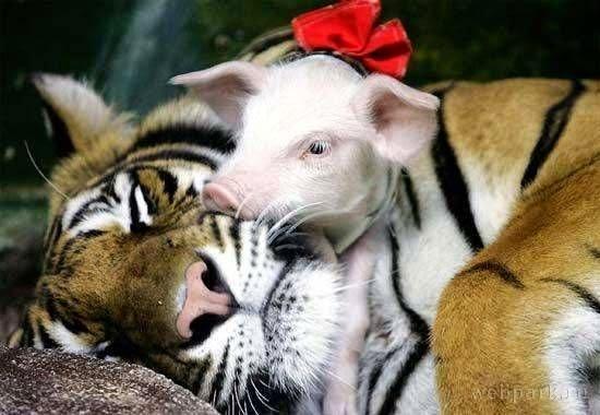 San Valentín animales