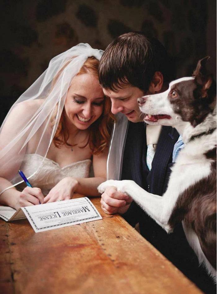 boda-perro-firma