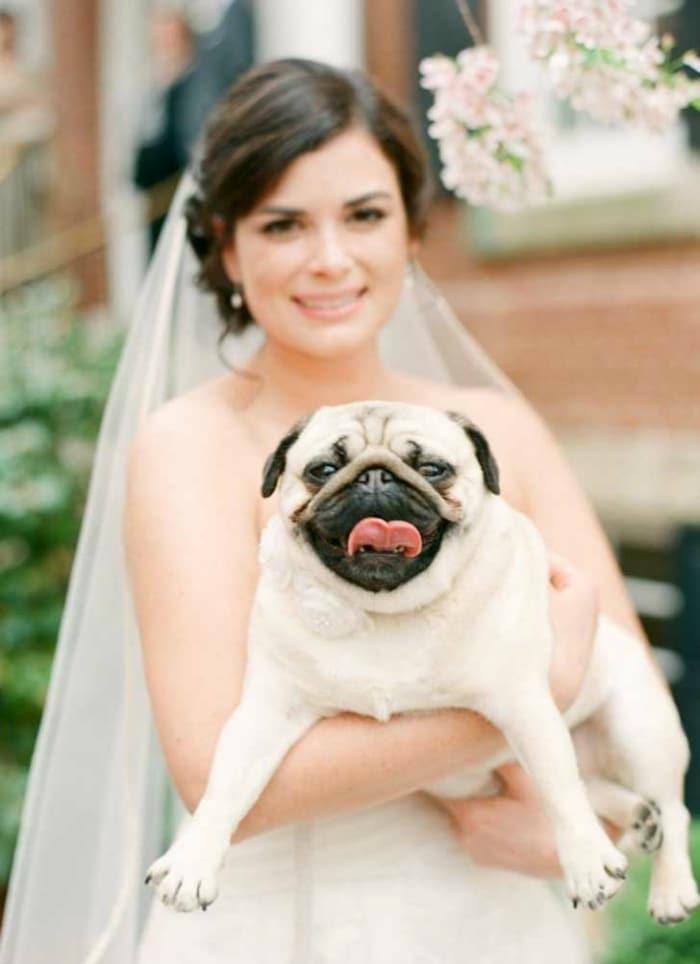 boda-perro