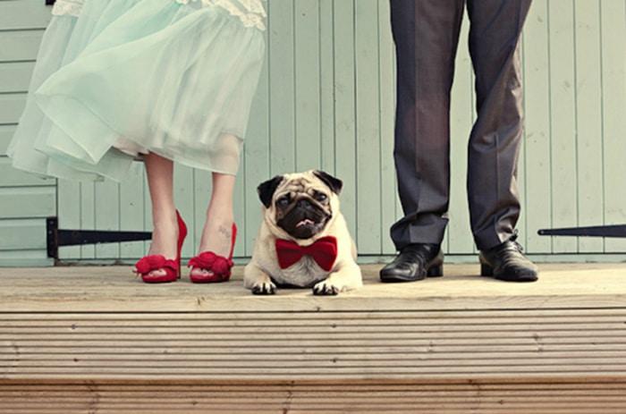 carlino-boda