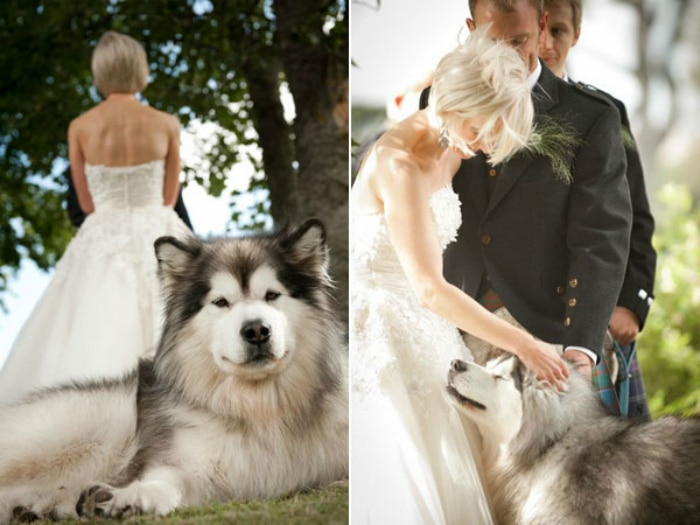 felices-boda-perro