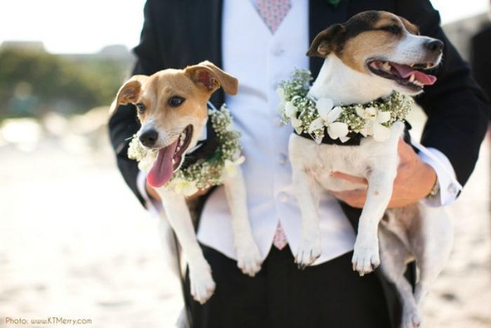 felices-perros-boda