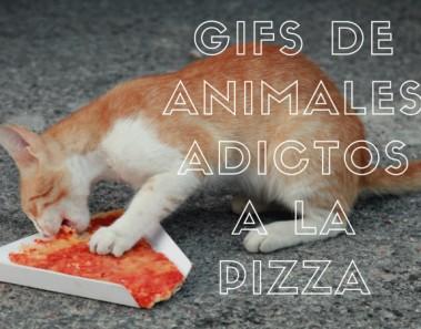 gifs-de-animales-adictos-a-la-pizza