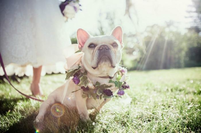 hermoso-perro-en-boda