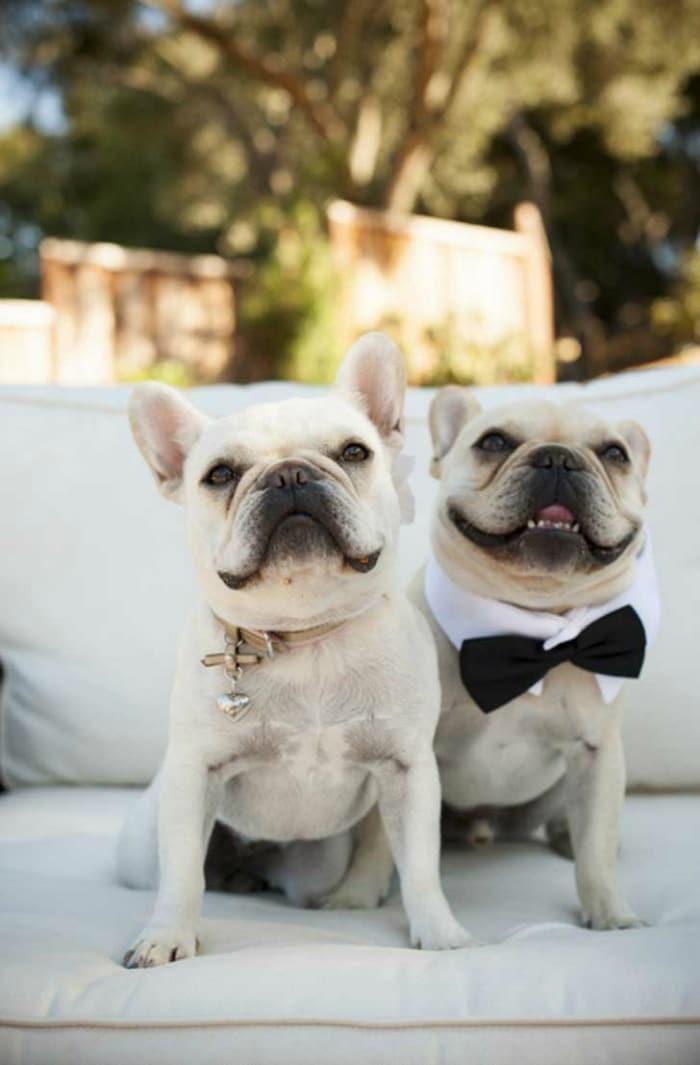 pareja-perros