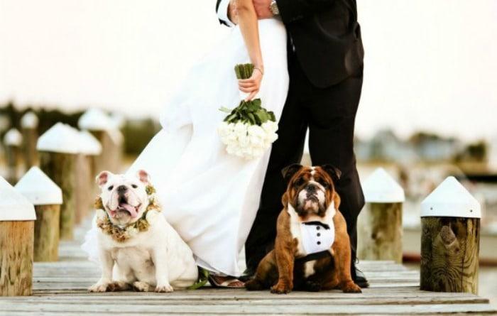 perro-en-una-boda
