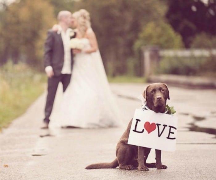 perro-recien-casados