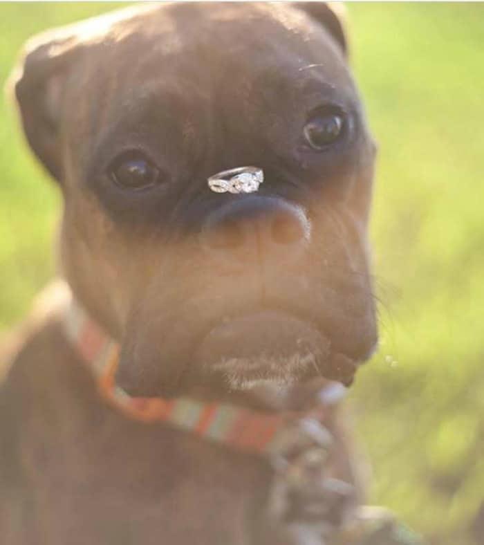 perro-trae-anillo-boda
