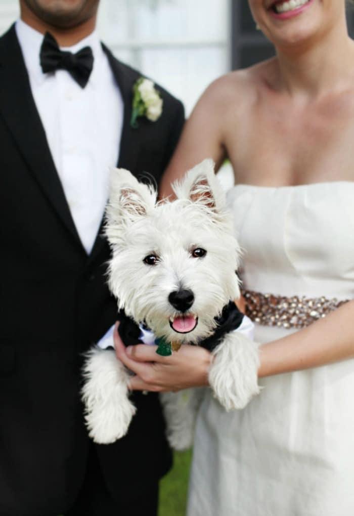 perros-en-bodas