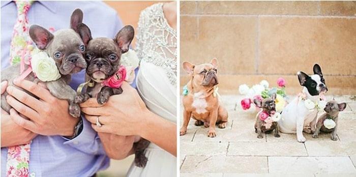 perros-invitaciones-boda